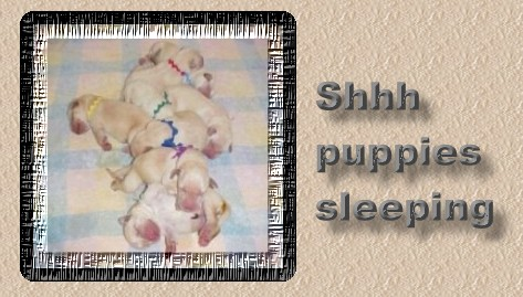 shhhhh puppies sleeping